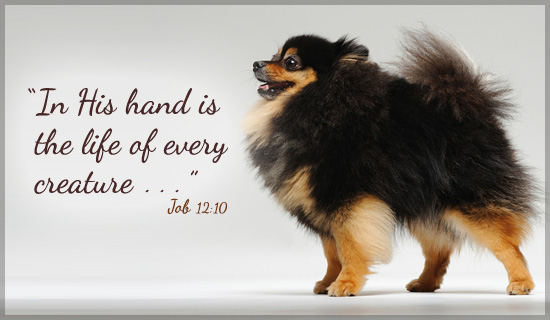 Job 12:10