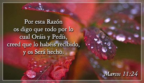 Marcos 11:24