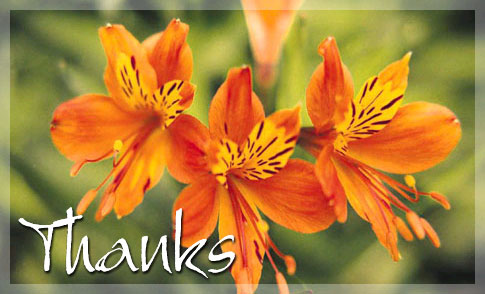 Free Orange Flowers eCard - eMail Free Personalized Thank You ...