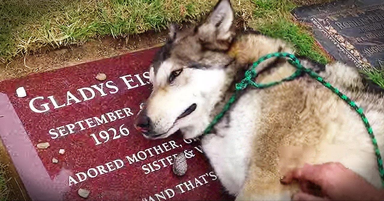 Heartbroken Dog Cries On Owner's Grave