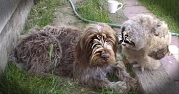 Sleepy Dog Gets Befriended by an... Owl?!? How Cute!