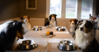 Family of Adorable Dogs Say Grace Before Eating - AMEN, Pupp