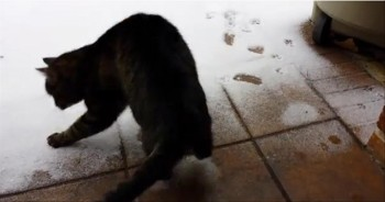 Cute Southern Kitty's Hilarious Reaction to Experiencing Her First Snow