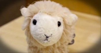 Don't be Embarrassed if this Toy Lamb Makes You Cry -- I Teared Up, Too!