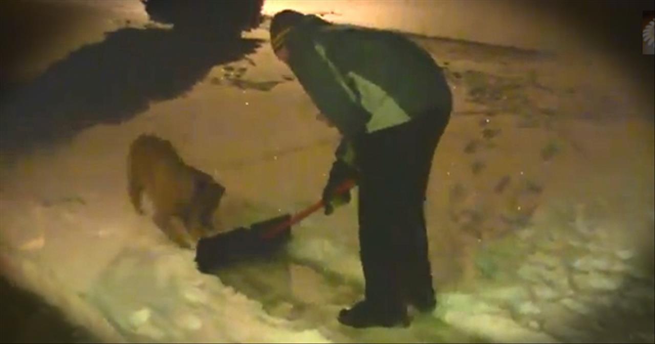 Cute Dogs Help Their Owners Shovel Snow