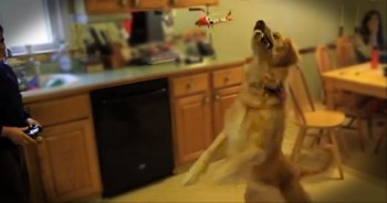 A Puppy's Battle with a Helicopter is the Silliest Thing We've Seen All Day