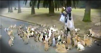 We've Never Seen Anything Like This Before. . .It's An Adorable Animal Stampede. . .of Bunnies!