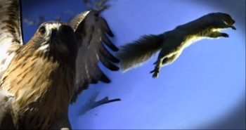 This Epic Chase Between a Squirrel and Hawk Will Leave You Breathless!