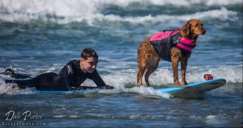 Surfing Dog Grants Wish For Teen With Brain Cancer