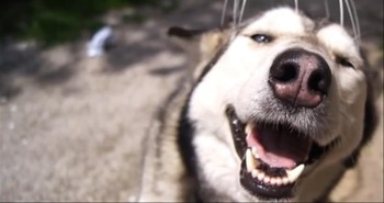 This Happy Dog Just Loves Getting His Head Scratche
