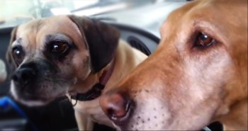 Watch These 2 Adorable Pups and You'll See Why Daisy Has to Get Her Treat First