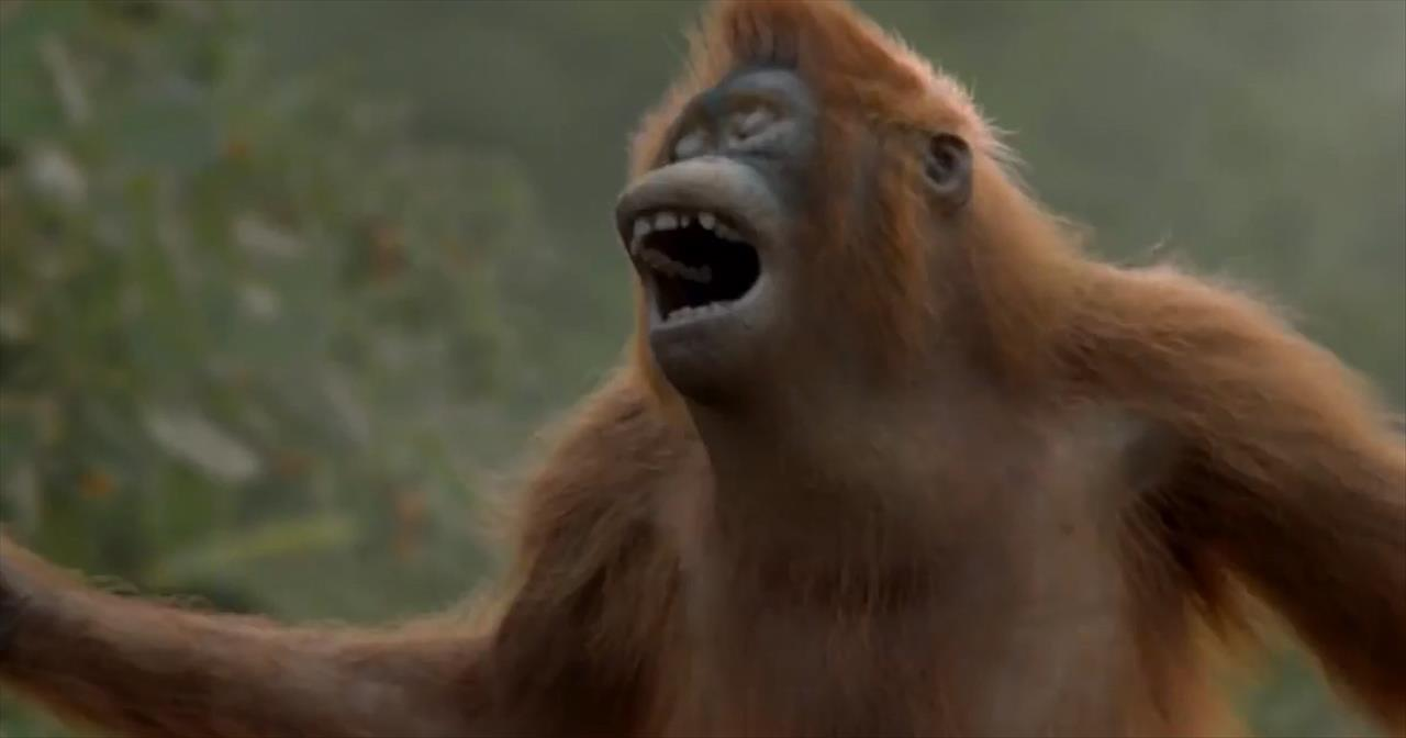Funny Orangutan Has Best Dance Moves We've Ever Seen!