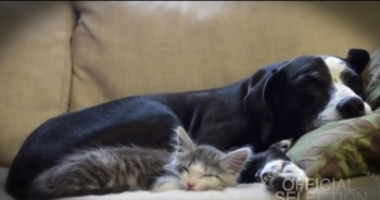 Adorable Kitten Talks About His Adoption -- So Cute!