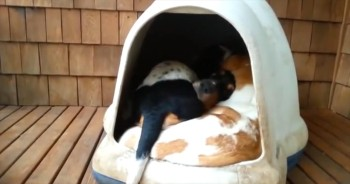 It's Just an Ordinary Dog House Until You See What Comes Out!