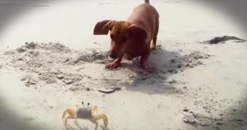 These Unlikely Playmates Just Can't Figure Each Other Out