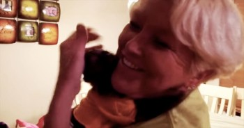 Everyone Loves Their Grandma – Including This Affectionate Monkey