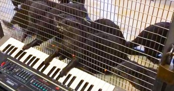 Watch Out Mozart - These Otters Are Putting On