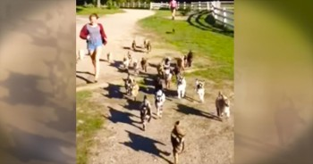 There's Nothing Ba-a-a-a-d About This Baby Goat Stampede!