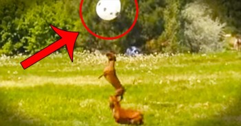 2 Adorable Dogs, 1 Balloon, And TONS of Fun! This Is SO Cute!