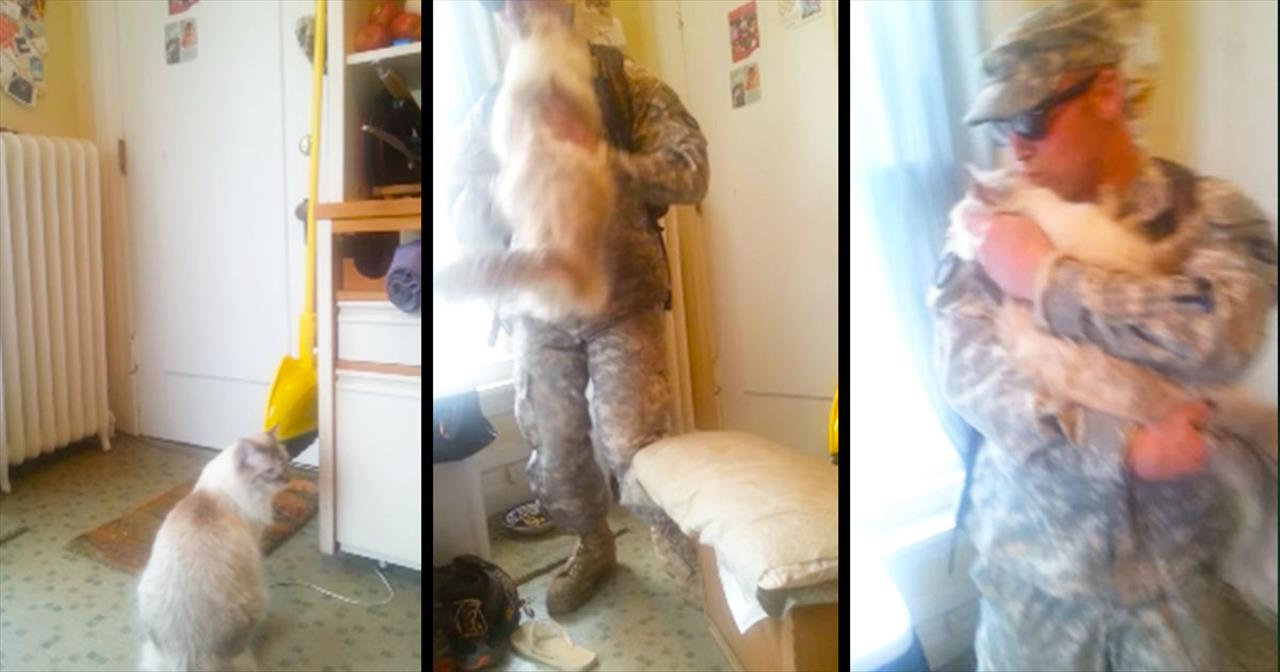 This Sweet Kitty Is SO Excited To Welcome Home His Soldier. My Heart Just Melted!