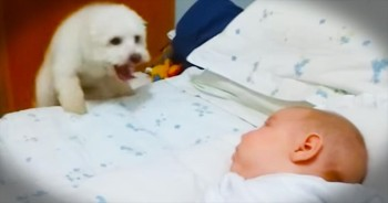 This Game Of Peek-A-Boo Is Seriously Melting My Heart – How Cute Is That Pup?