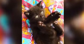 I'm Not Sure If This Is A Kitten Or A Squeak Toy – Either Way It's ADORABLE!