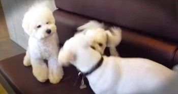 When These 2 Pups Started Fighting, You'll LOL At Who Broke Them Up!