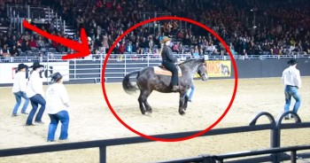 One Horse Stole The Show With His DANCE To This Country Classic – So Awesome!
