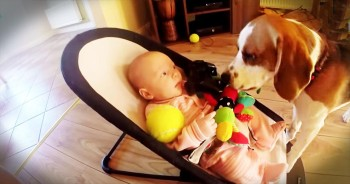 When This Pup Made His Baby Human Cry, He Felt Terrible. How He Apologizes Is Just Too Cute!