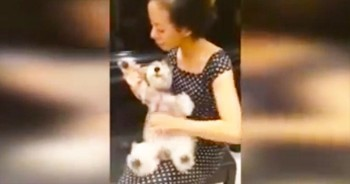 It's A Paw-Stomping Good Time When This Woman Gets Her Hands On This HILARIOUS New 'Instrument'