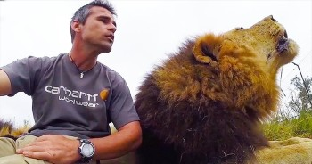 Evidently, This Interrupting Lion Has A Lot To Say – And He Won't Be Silenced!