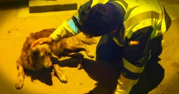 One Compassionate Traffic Guard Stays By A Dying Dog's Side – My Heart Is Breaking