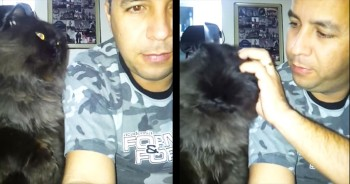 This Kitty Is Ready For More Affection – And He Wants It NOW!