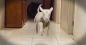 It Only Took 7 Seconds For This Lamb To Completely MELT My Heart – Precious!