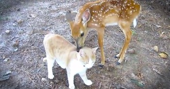 This Baby Deer Has Found A Furry New Friend – And It's Melting My Heart!