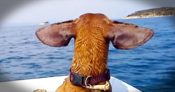 Doggies Deserve Vacations Too – And This Pup Just Had 1 EPIC Time!