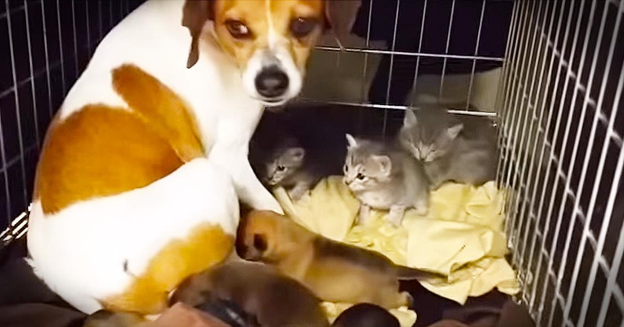 This Mama Dog Has 1 BIG Heart. And These Orphaned Kitties Agree!