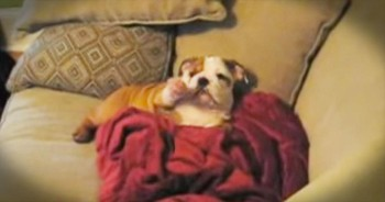 When His Owner's Say 'HELLO' – You'll Never Guess What This Bulldog Does Next!