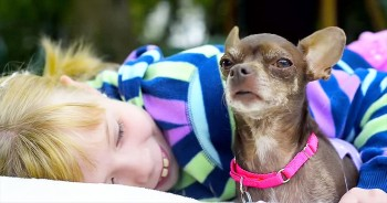 This Deformed Rescue Dog Was Homeless. Until She Met 1 Girl With A Beautiful HEART!