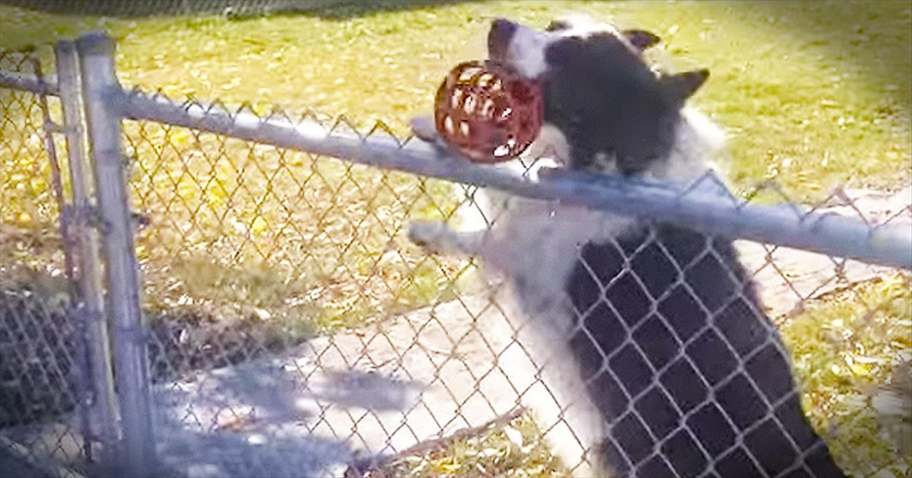 This Pup Just Figured Out The The CLEVEREST Way To Play Fetch. And I'm STILL LOLing!
