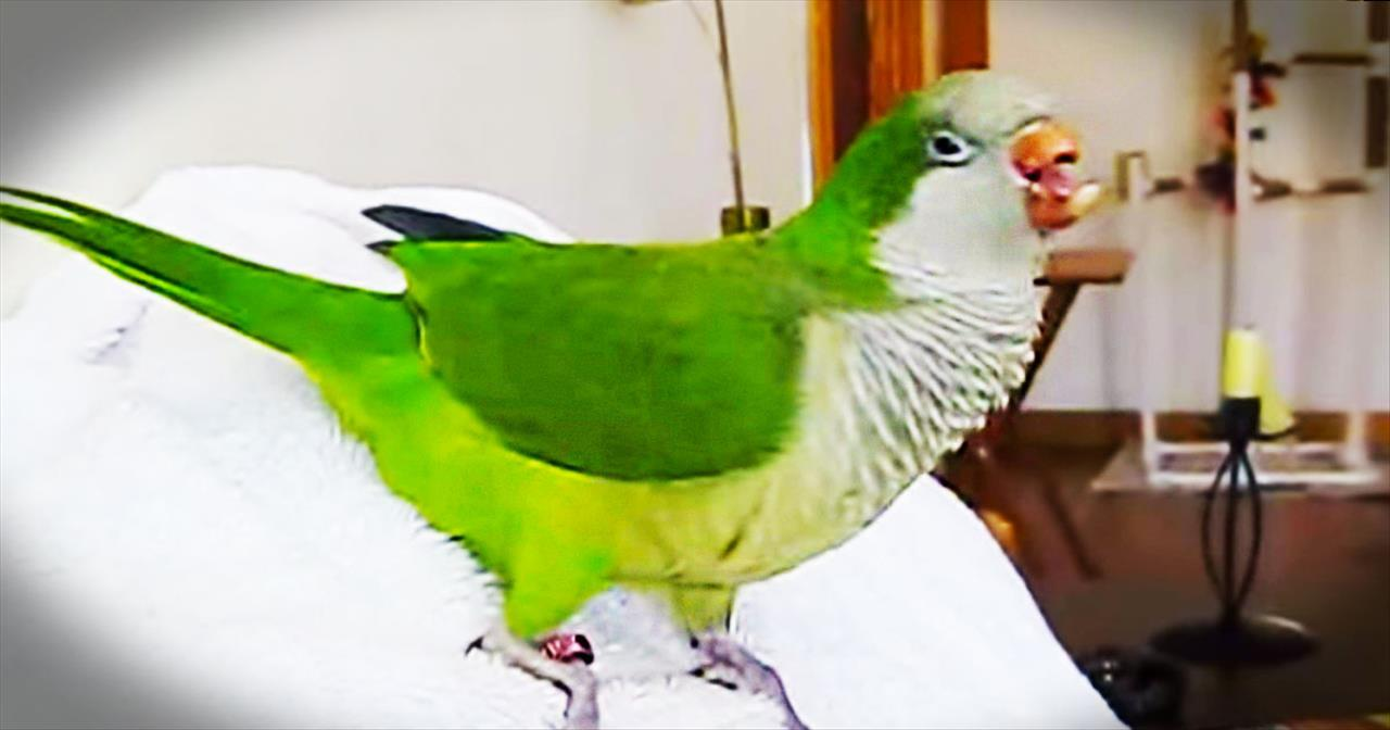 This Rescue Parrot Can't Stop Laughing. And It's Completely Cracking Me Up! LOL!