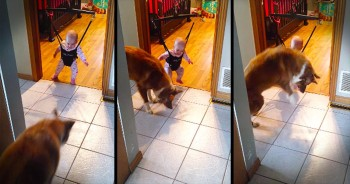 This Pup Is Teaching His Tiny Human The CUTEST Thing. And Now I'm Jumping With Joy!