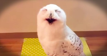 This Owl Is Making The FUNNIEST Faces. And He's Got Me LOLing Like Crazy!