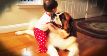 When This Precious Baby Hugs A Dog For The First Time, My Heart Fully Melted!