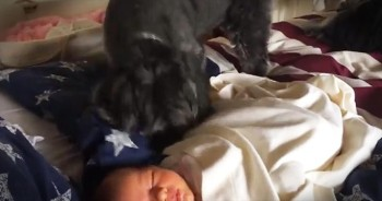 Adorable Puppy Tucks In The Brand New Baby