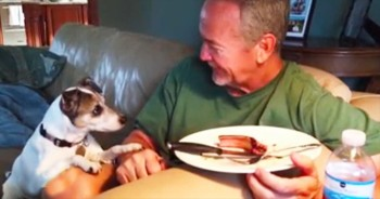 Dog And His Owner Eye The Dinner Plate At The Same Time