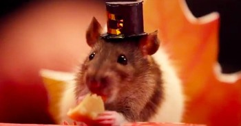 It's Cuteness Overload When This Tiny Hamster Celebrates Thanksgiving With His Furry Friends
