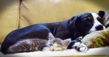 7-Year-Old Narrates Beautiful Friendship Between Dog And Cat