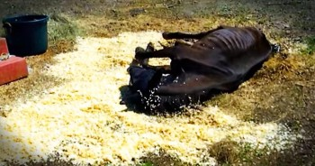 Neglected Horse Gets A Second Chance At Life