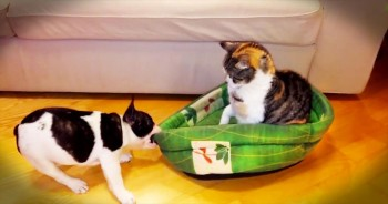 Precious Kitty Steals Bed From Puppy